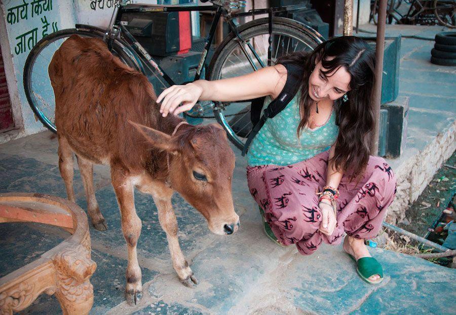 vaca-sagrada-india